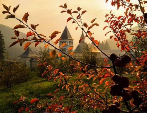Liniștea mea și inima Bucovinei